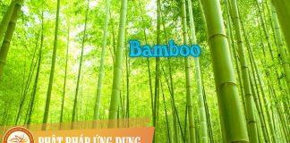 Baamboo | Phật Pháp Ứng Dụng