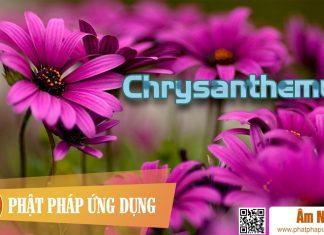 Am-Nhac-Phat-Giao-Chrysanthemum-Cuc-Phat-Phap-Ung-Dung