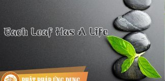Am-Nhac-Phat-Giao-Each-Leaf-Has-A-Life-(co-Cam)-Phat-Phap-Ung-Dung