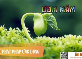 Am-Nhac-Phat-Giao-Uom-Mam-Phat-Phap-Ung-Dung