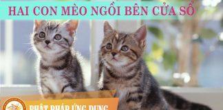 Hai Con Mèo Ngồi Bên Cửa Sổ - Nguyễn Nhật Ánh - Sách Nói (Audio Books)