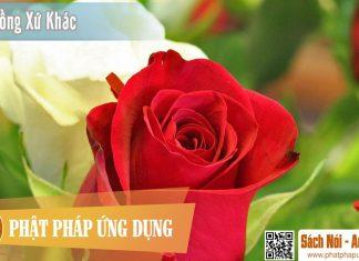 Hoa Hồng Xứ Khác - Nguyễn Nhật Ánh - Sách Nói (Audio Books)