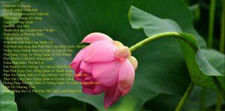 Những bài hát tân nhạc Phật giáo chọn lọc - Vol 2 | Phật Pháp Ứng Dụng
