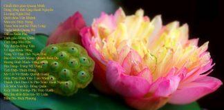 Những bài hát tân nhạc Phật giáo chọn lọc - Vol 3 | Phật Pháp Ứng Dụng