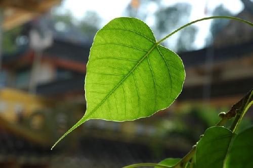 Hãy học thiền Vipassana khi tuổi còn trẻ