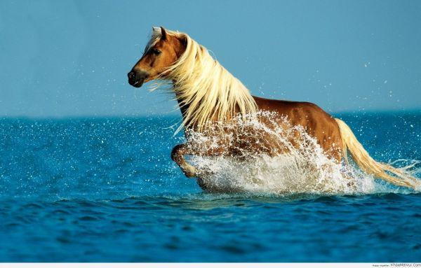 Ngựa đi xin ấn