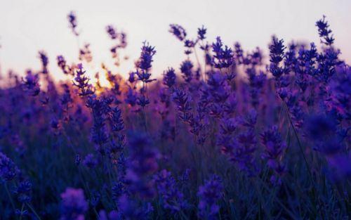 Những mùi hương mang lại tâm trạng phấn chấn