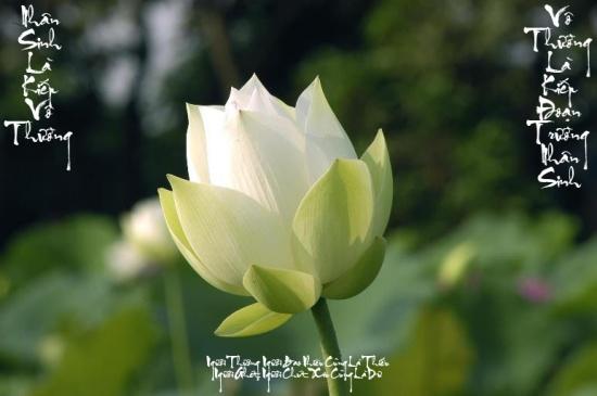 Bước Đầu Học Phật - 25. Phật là gì?