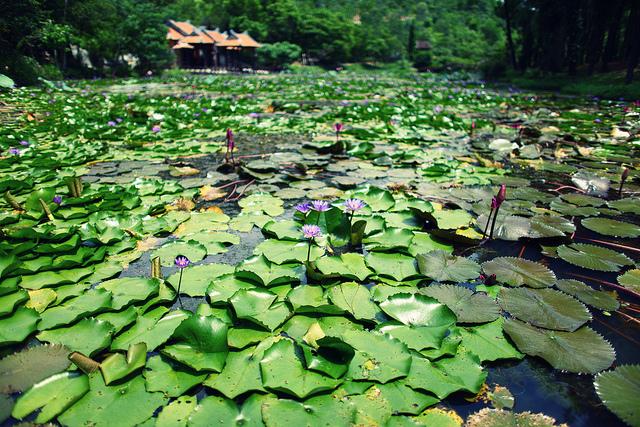 Chùa Thiên Mụ: ngôi chùa cổ nhất cố đô Huế
