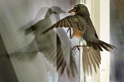 Con chim bị mù?