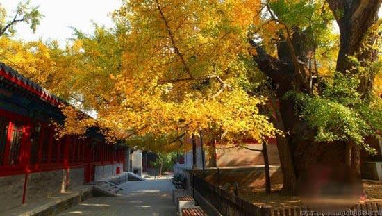 Đàm Giá Tự: ngôi chùa cổ nhất Bắc Kinh