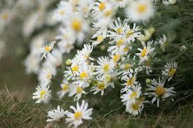 Hoa khôi lớp xấu xí