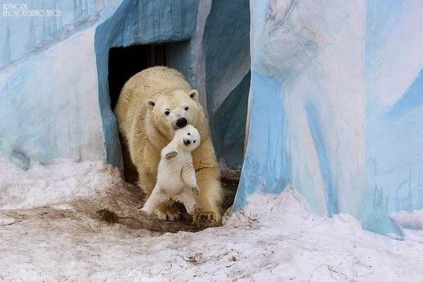 Khoảnh khắc ấm áp của tình mẫu tử trong vương quốc động vật