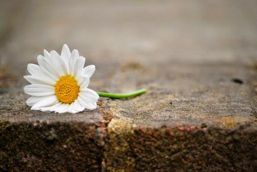 Mười chuẩn mực cơ bản của đạo đức Phật giáo