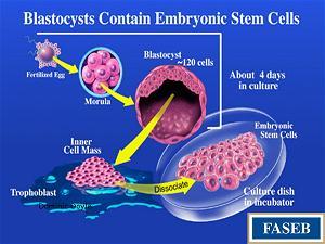 Nghiên cứu tế bào gốc, đạo đức sinh học và Phật học
