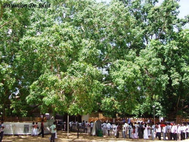 Sri Lanka: Giọt lệ tươi xanh vùng Nam Á
